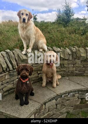 Who let the dogs out - Stock Photo
