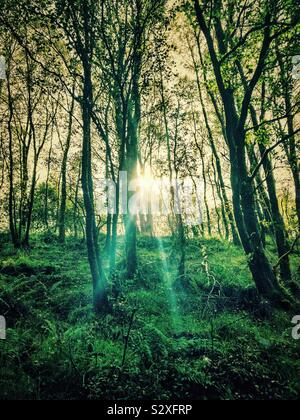 Sun's rays shining through trees - Stock Photo