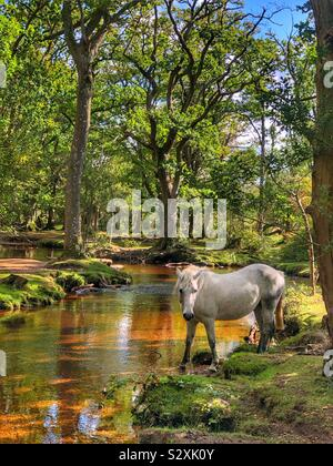 Pony at Ober water New Forest, Hampshire, England - Stock Photo