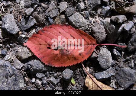 Red leaf - Stock Photo