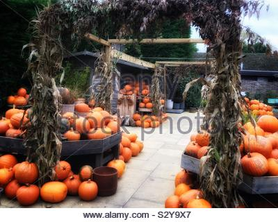 Pumpkins on sale for Halloween at a UK farm shop. - Stock Photo