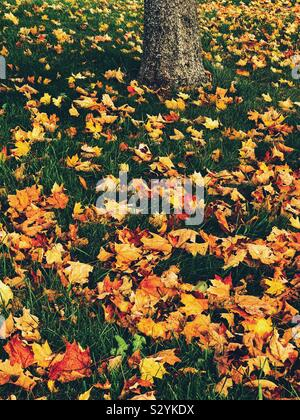 Autumn leaves on the ground with one tree trunk in the background