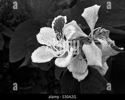 Flower black and white - Stock Photo