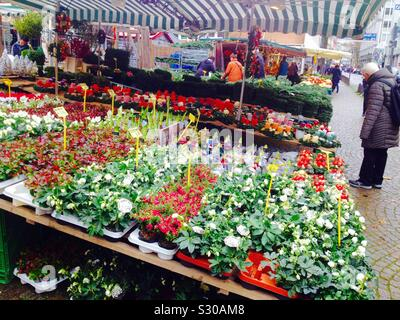 Wuppertal Saint Laurentius Market. Plants and Christmas decoration parades. Germany - Stock Photo