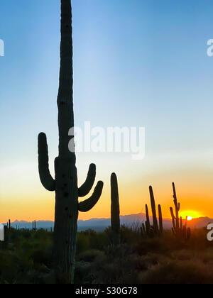 Saguaro Cacti Silhouetted Against a Setting Sun - Stock Photo