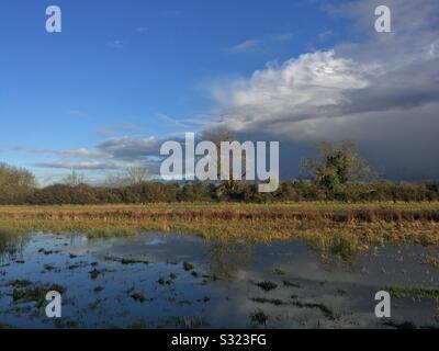 Flood meadow in the Stort valley at Tednambury near Bishops Stortford Hertfordshire - Stock Photo