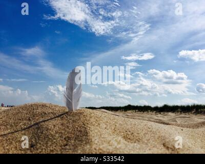 A bird feather found on the beach sticking up in the sand ready fo whatever is going to come it's way. - Stock Photo