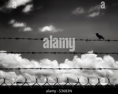 Black bird on a barbed wire fence silhouetted against a cloudy sky - Stock Photo