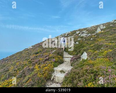 Walker on the coastal path between South Stack and North Stack, Holyhead, Anglesey - Stock Photo