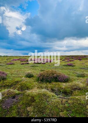 Sutton Heath, Woodbridge, Suffolk - 23 August 2020: Beautiful colours on a stormy day at this AONB protected site. - Stock Photo