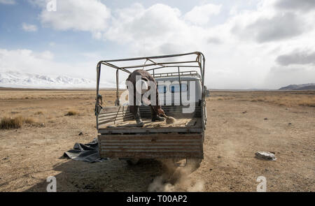Bayan Ulgii, Mongolia, 29th September 2015: mongolian kazakh nomad man cleaning the back of the car in preparation of moving their yurt to a new locat - Stock Photo