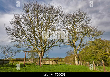 A small Cottage Garden offshoot with a Wooden swing overlooked by budding Sycamore Trees in Colliston, Angus, Scotland. - Stock Photo