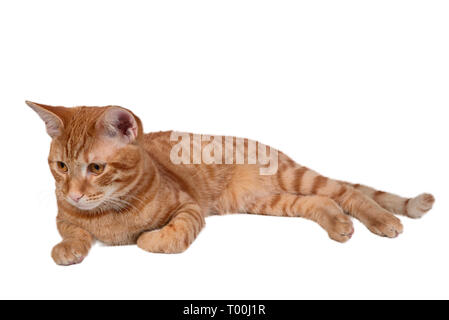The ginger young cat lies isolated on white - Stock Photo