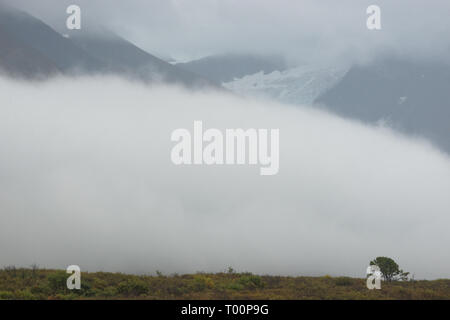 Lone tree in the clouds, Haines Road, northern British Columbia, Canada - Stock Photo