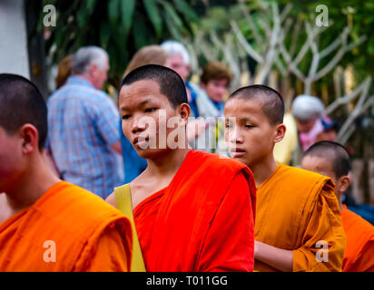 Buddhist monks in orange robes queue for morning alms giving ceremony, Luang Prabang, Laos - Stock Photo