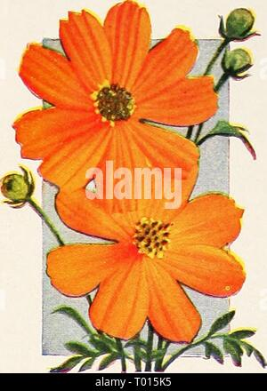 Dreer's garden book for 1947 . dreersgardenbook1947henr Year: 1947  Nine Glorious ANNUALS 2049 Cosmos, Early Orange Flare Pkt. 15c; large pkt. 30c; 'i oz. 50c. ^mu E.L^4f^^^^H jfll t^ ^ k^l^^^^Qk ''1 1^ A. 2431 Gaillardia, Annual Double Mixed Pkt. 15c; large pkt. 40c; J4 oz. 73c. - Stock Photo