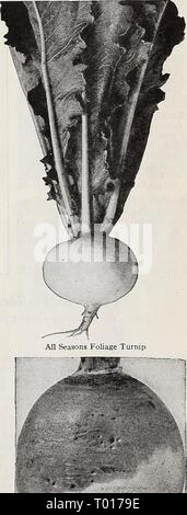 Dreer's garden book for 1940 . dreersgardenbook1940henr Year: 1940  Turnip, Purple-Top White Globe Dreer's Improved Purple-Top Ruta Baga Henry A. Dreer, Inc., 1306 Spring Garden St., Philadelphia, Pa. 73 - Stock Photo