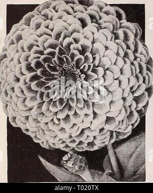 Dreer's garden book for 1940 . dreersgardenbook1940henr Year: 1940  Novelties and Specialties for 1940 The Latest in Modern ZINNIAS - Stock Photo