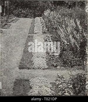 Dreer's garden book for 1940 . dreersgardenbook1940henr Year: 1940  Agrostemma coronaria Pkt. 10c;  oz. 25c.    Alyssum, Carpet of Snow Pkt. 10c; yi oz. 30c. - Stock Photo
