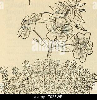 Dreer's garden calendar : 1881 . dreersgardencale1881henr Year: 1881  u Dreer's Garden Calendar. - Stock Photo
