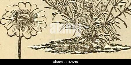 Dreer's garden calendar : 1881 . dreersgardencale1881henr Year: 1881  *& m - Stock Photo