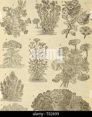 Dreer's garden calendar : 1881 . dreersgardencale1881henr Year: 1881  48 K Dreers Garden Calendar. - Stock Photo
