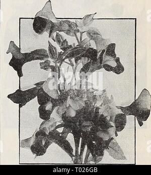Dreer's garden book for 1940 . dreersgardenbook1940henr Year: 1940  Tithonia speciosa, Early-Flowering Pkt. 15c; special pkt. 50c.    Torenia - Stock Photo