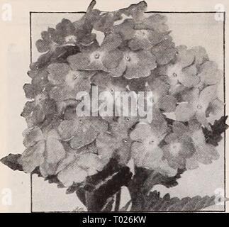 Dreer's garden book for 1940 . dreersgardenbook1940henr Year: 1940  HENRY A. DREER, Inc., Philadelphia, Pa. New Giant 'erbena - Stock Photo