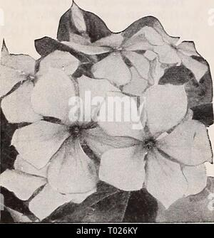 Dreer's garden book for 1940 . dreersgardenbook1940henr Year: 1940  Verbena erinoides    Vinca rosea - Stock Photo