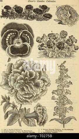 Dreer's garden calendar : 1881 . dreersgardencale1881henr Year: 1881  Dreer's Garden Calendar,    1 and 2. Double Poktulaca. 3. Dreer's Premium Pansy, or Heartsease. 4. Pansy Variety, or Viola Tricolor Maxima 5. Double Fringed Petunia, or Grandiflora Fimbriata Flore-Pleno. Pentstemon Variety. - Stock Photo