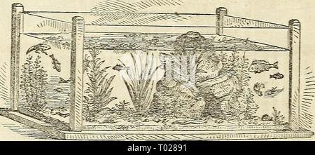 Dreer's garden calendar for 1864 . dreersgardencale1864henr Year: 1864  Fig. 10—Aquasitm. but the addition of minute shell-fish and other small aquatic animals, renders the water clear, and each causes the other to thrive. Some skill and expe- rience are necessary to adjust the proper number or quantity of each, for their best success The Horticulturist, and Journal of Rural Art and Rural taste. York; Mead and Woodward, $2 per annum. Xew The Culturist, Philadelphia, A. M. Spangler Editor, an Agricultural and Horticultural Monthly. 25 cents per annum, with a beautiful premium to every Subscribe - Stock Photo