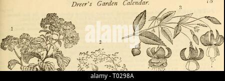 Dreer's garden calendar : 1881 . dreersgardencale1881henr Year: 1881  Dreer's Garden Calendar.    ^ 'l V ^ â -' â sW^f SB - Stock Photo
