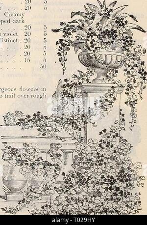 Dreer's garden calendar : 1899 . dreersgardencale1899henr Year: 1899  DREER'S SUPERB NASTURTIUMS. (See colored illustration on front cover of Catalogue.) Tom Thumb, Dwarf or Bedding Varieties. The improved varieties of the Dwarf Nasturtium are among the most popular and beautiful of our garden plants. Their neat, compact growth, rich colored flowers and free-blooming and long-lasting qualities, together with their adaptability to almost any soil or situation, make them unsurpassed for garden decoration. 1 foot. PER oz pkt. 0144 Aurora. Primrose to pale pink and carmine 20 5 6136 Beauty. Yellow - Stock Photo