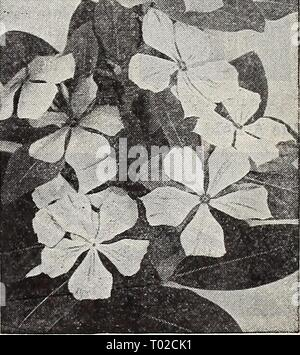 Dreer's garden book for 1940 . dreersgardenbook1940henr Year: 1940  Vinca rosea - Stock Photo