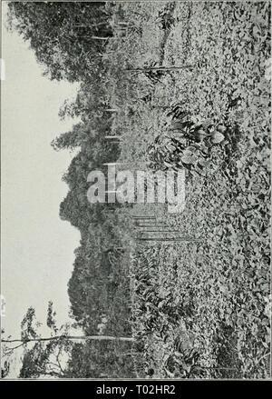 Dr. K.W. van Gorkom's Oost-Indische cultures. Opnieuw uitg. onder redactie van H.C. Prinsen Geerligs. [Door J.P. van der Stock et al.] . drkwvangorkomsoo01gorkuoft Year: 1917 - Stock Photo