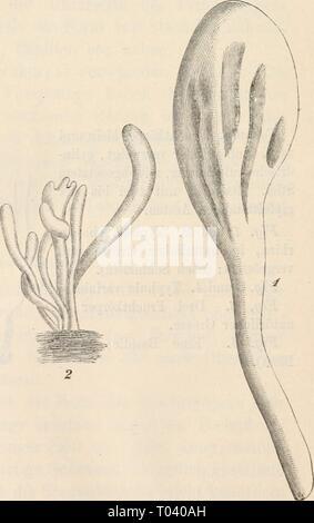 Dr. L. Rabenhorst's Kryptogamen-Flora von Deutschland, Oesterreich und der Schweiz . drlrabenhorstskr0101rabe Year: 1884 - Stock Photo