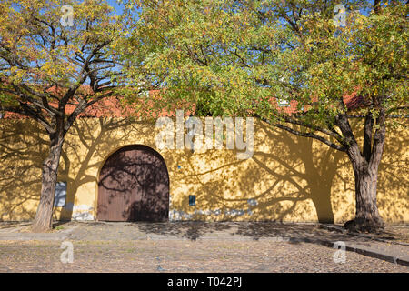 Prague - The acacias for the wall of Capuchins cloister. - Stock Photo