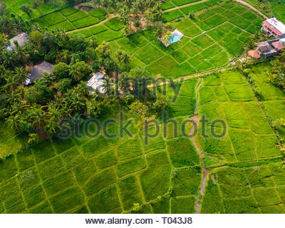 Rice Terrace Aerial Shot. Image of beautiful terrace rice field in Thailand - Stock Photo