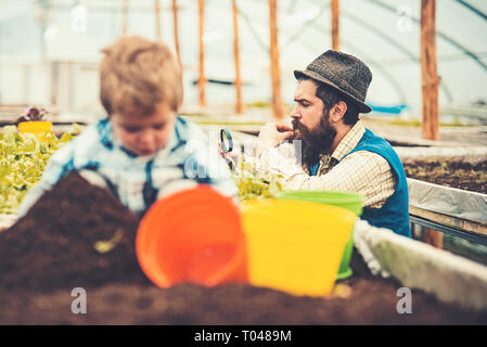 Gardener looking at his harvest through magnifying glass. Side view bearded man in blue vest, yellow shirt and fedora hat working in green house - Stock Photo