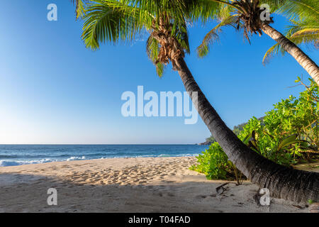 Exotic sandy beach at sunset with coco palms on tropical island