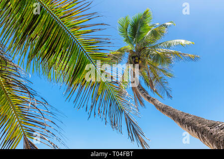 Coconut palm trees against blue sky on tropical beach. - Stock Photo