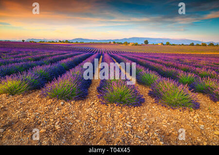 Majestic colorful sunset and violet lavender fields near Valensole village, Provence region, France, Europe - Stock Photo
