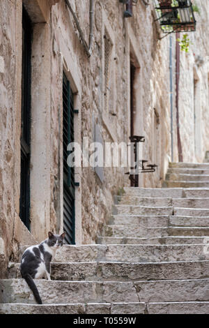A grey and white domestic cat sits on stone steps in the back streets of Dubrovnik old town, Croatia - Stock Photo