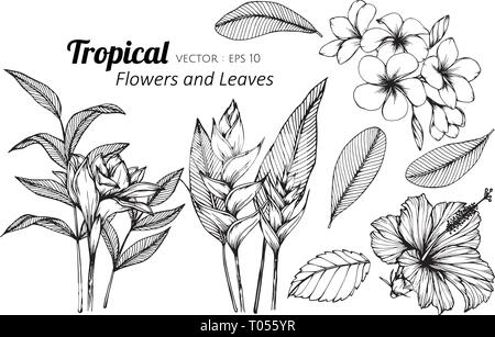 Collection set of Tropical flower and leaves drawing illustration. for pattern, logo, template, banner, posters, invitation and greeting card design. - Stock Photo