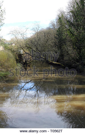 Tree reflections in the River Frome, Snuff Mills, Bristol, UK - Stock Photo