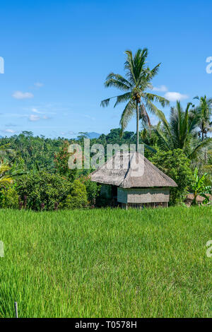 Landscape with green rice fields, straw house and palm trees at sunny day in island Bali, Indonesia. Nature and travel concept - Stock Photo
