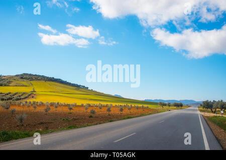 Road to Los Cortijos and olive groves. Fuente El Fresno, Ciudad Real province, Castilla La Mancha, Spain. - Stock Photo