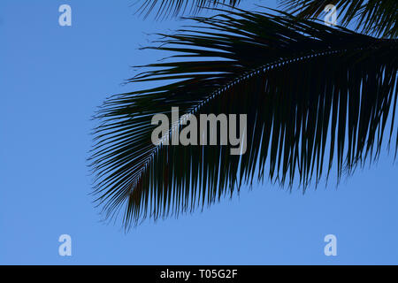 Close up of a palm tree leaf silhouetted against a deep blue sky - Stock Photo