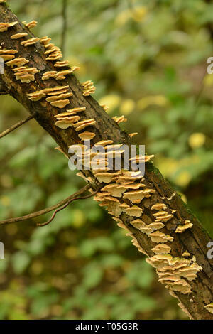 Fungus on tree branch - Stock Photo