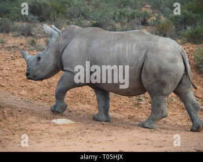 Big-Five-Safari in Südafrika - von Jana Reutin - Stock Photo